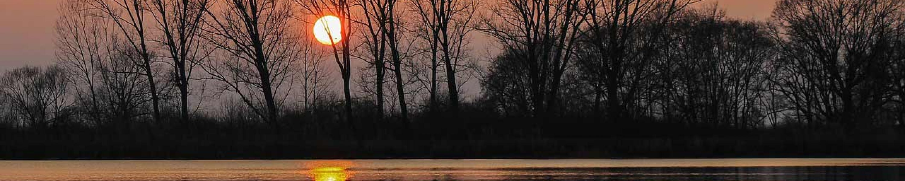 sunset-trees-water-surface-opt